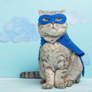 Тест: Кот или кошка?
