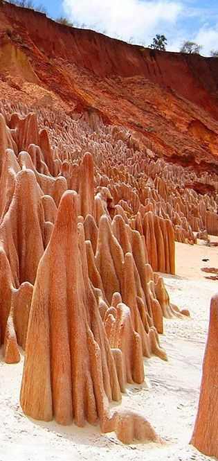 Фантастичний острів: Цікавинки про Мадагаскар