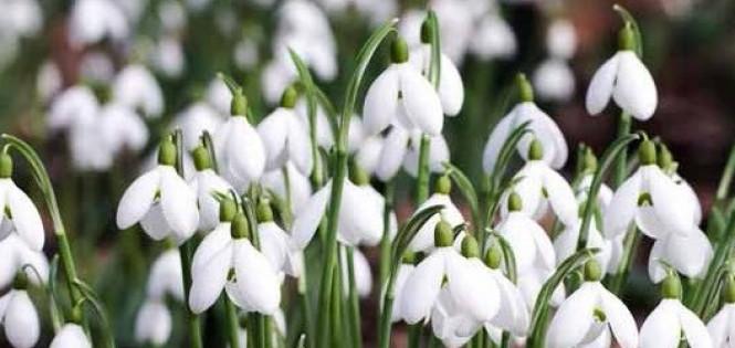 Найгарніші весняні квіти