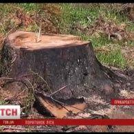 На Прикарпатті намагаються зупинити вирубку лісів та відновити вже знищені