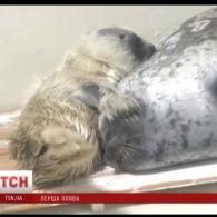 Дитинча нерпи спричинило справжній фурор в японському зоопарку
