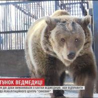 """Ведмедицю з Дніпра транспортували до реабілітаційного центру """"Синевир"""""""