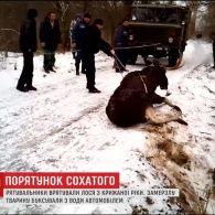 На Харківщині провели операцію з порятунку лося з крижаної річки