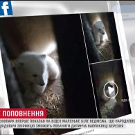 Миколаївський зоопарк вперше показав маленького білого ведмедика