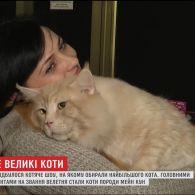 У Києві обирали найбільшого кота