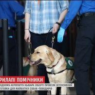 В американському аеропорту вчили собак-поводирів допомагати незрячим пасажирам