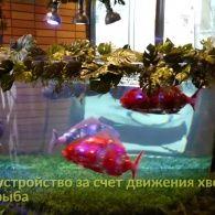 В Японії створили реалістичних риб-роботів, яких можна завести вдома