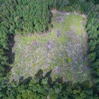 Вирубка лісу в Україні досягає масштабів екологічного лиха