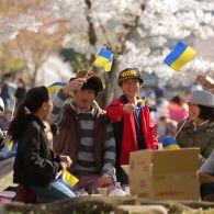 Как японцы на самом деле празднуют цветение сакуры