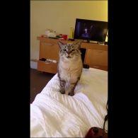 Чихающий кіт
