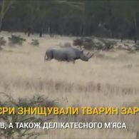 Зникли назавжди: топ-7 тварин, які вимерли в 21 столітті