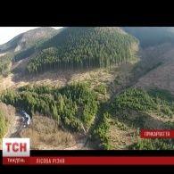 Останні дні Карпат: тотальне вирізання карпатського лісу