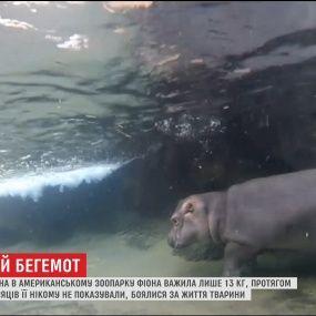 Крошечного бегемотика весом в 122 килограмма впервые показали публике в зоопарке Огайо