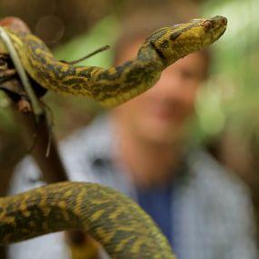 Секрет довголіття японців і полювання на змію. Японія. Світ навиворіт - 10 серія, 9 сезон
