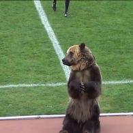 Виступ ведмедя на футболі в РФ обурив захисників тварин