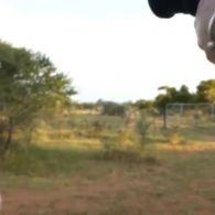 Лев стрибнув у джип на сафарі