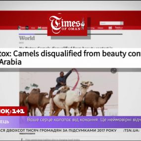 Наказание за применение ботокса верблюдам