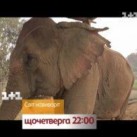Дмитрий Комаров осуществит свою мечту - смотрите Мир наизнанку