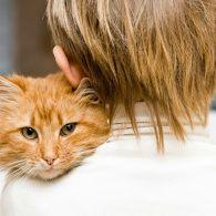 Вуса, лапи і хвости: сьогодні відзначається Міжнародний день котів