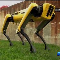 Американські інженери створили робота-собаку нового покоління
