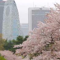 Мир наизнанку 9 сезон 1 выпуск. Япония - страна сакуры и трудоголиков