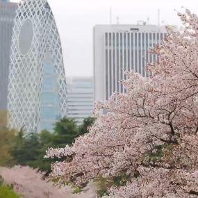 Японія – країна сакури і трудоголіків. Світ навиворіт - 1 серія, 9 сезон