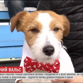 Собаки из разных городов приняли участие в фестивале собачьих танцев в Днепре