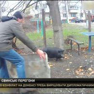 У Черкасах вулицею розгулювала свиня