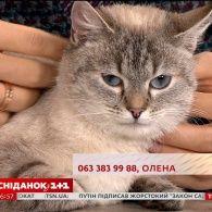 Лагідна кішечка Нюша шукає люблячу родину