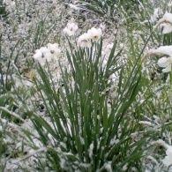 Сніжний травень в Україні