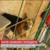 Холодна зброя: в Україні господарю бійцівської собаки, яка скалічила людину, загрожує лише адміністративний штраф