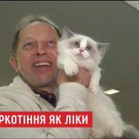Вчені довели, що муркотіння котів корисне для людей
