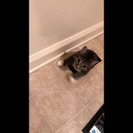 Американку здивував непроханий кіт