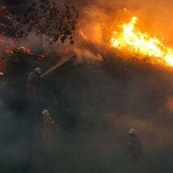 62 жертви, тисячі гектарів попелу та знищена інфраструктура: масштаби лісових пожеж у Португалії