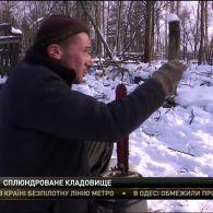 На Чернігівщині спиляли з півтисячі добротних стовбурів