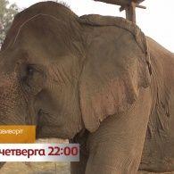 Будни самого старого слона на планете – смотрите Мир наизнанку