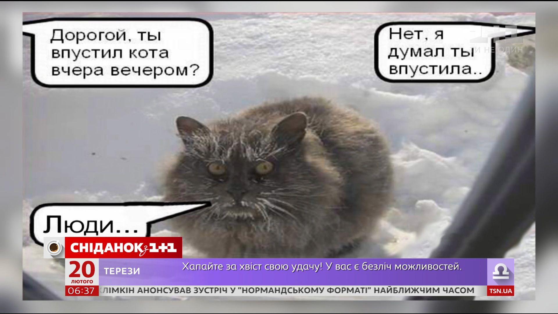 демотиваторы дорогой ты кота впустил женские эскизы, фото