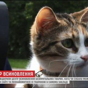 Во Львове появился центр, где выбирают хозяев для бездомных животных