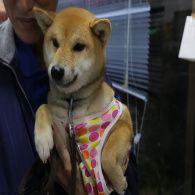 Прокат животных: как японцы справляются с одиночеством