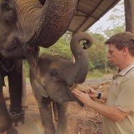 Трогательная история слоненка Тульсикали - Мир наизнанку
