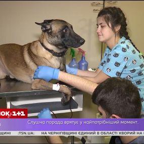 Кровь нужна не только людям: в Украине есть только 20 собак-доноров