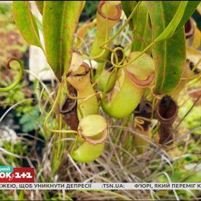 Усе про вирощування рослин-хижаків - Зелена ділянка