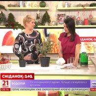 Які ялинки купують українці на Новий рік