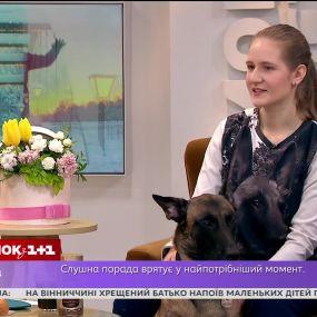 Как собака-донор Заррис спасает четвероногие жизни