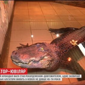 70-летнего крокодила Васю из Николаева внесли в Книгу рекордов Украины