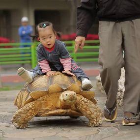 Японія: моторошні традиції минулого і таємниці індустрії для дорослих. Світ навиворіт - 4 серія, 9 сезон