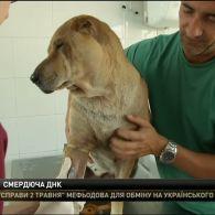 В іспанській Малазі створюють базу даних ДНК собак, аби розшукувати несумлінних власників