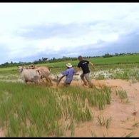 Мир наизнанку 1 сезон 1 выпуск. Камбоджа. Озеро Тонлесап