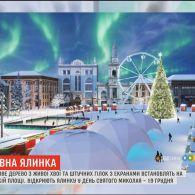 На Софійській площі встановлять 25-метрове дерево з живої хвої і штучних гілок