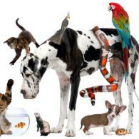 Всесвітній день домашніх тварин: кумедні відео хатніх улюбленців